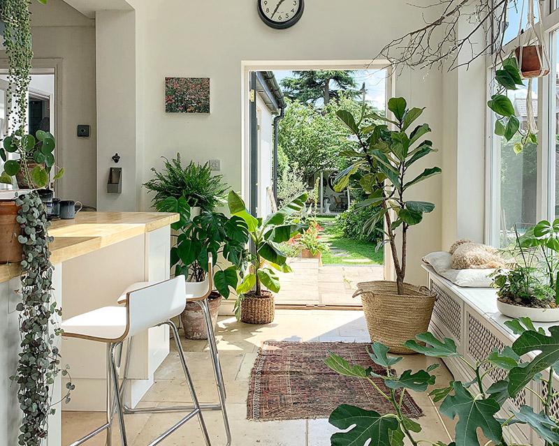 Trồng cây xanh trong nhà vừa mang tài lộc vừa tốt cho sức khỏe